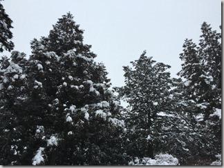 雪が降る [写記 vol.636]