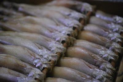 【北海道釧路産】柳葉魚が届きました [写記 vol.967]