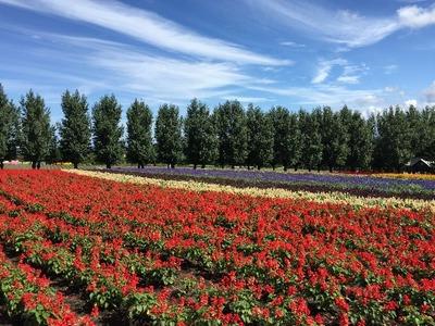 【ファーム富田】青空の下の花に癒やされました [北海道2016 秋 vol.10]