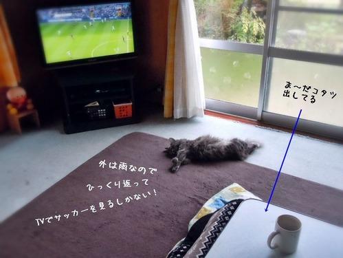 TV見るしか