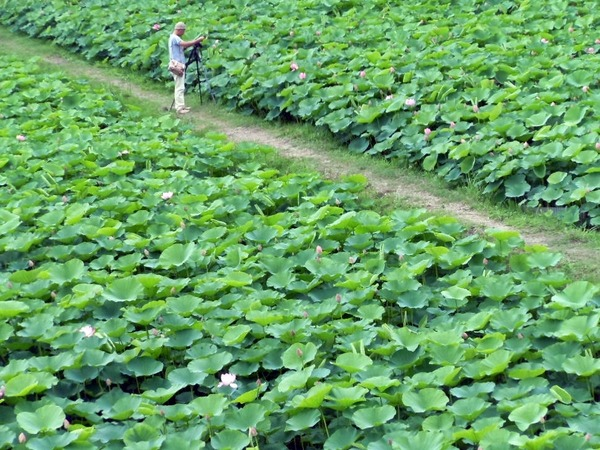 po-crop