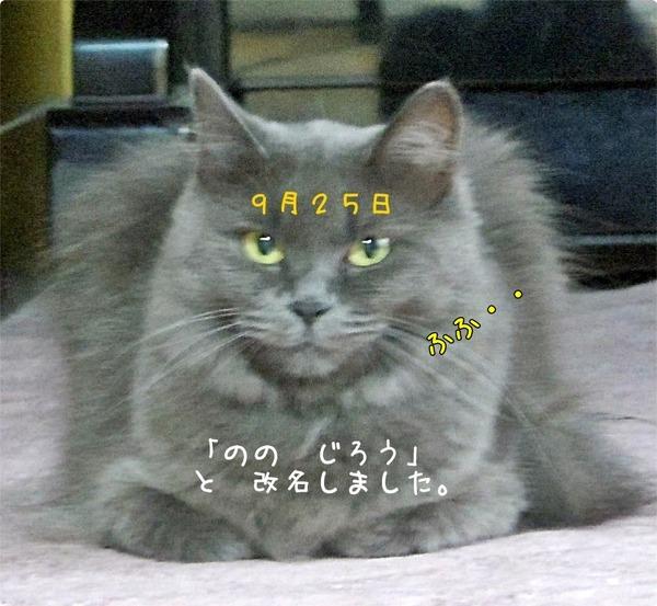 fcbe6852.jpg