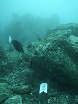 岩の下に入っているアナゴ岩へのチェーン
