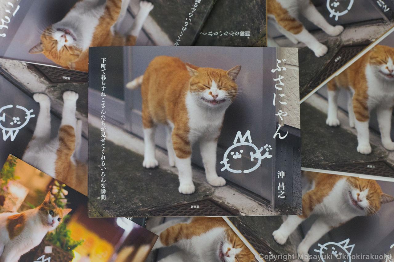 「猫写真集 ぶさにゃん」の画像検索結果
