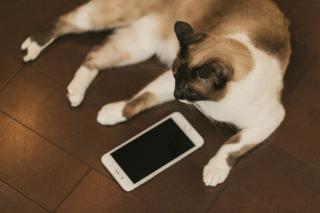 cat9V9A9026_TP_V4