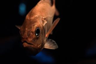 【悲報】人類、未だに深海の0.1%も把握出来ていない
