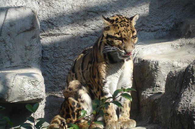 のら流動物園・水族館ブログ大阪市天王寺動物園コメントトラックバック