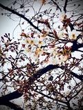 今年は桜の下でBBQでもしますかね