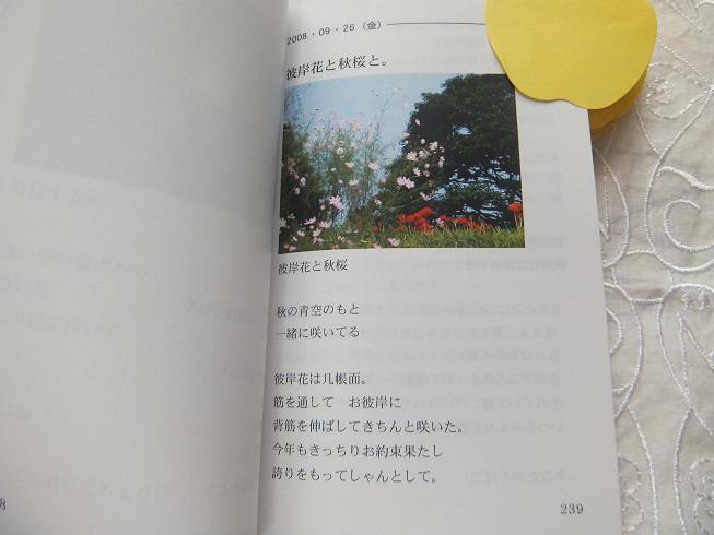 DSCF7032