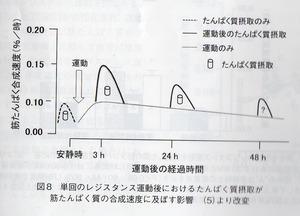 タンパク合成