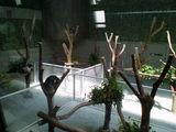 コアラたち