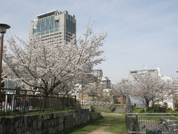 花隈公園の桜