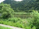 揖保川の鮎