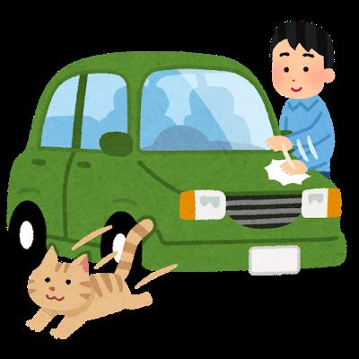 猫拾って車に乗せたら出てこなくなった助けて