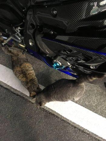 猫オフミ…ばいく板ちゃんねる総合雑談