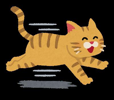 車を運転中、ネコが急に飛び出して来た時どう対応してる? : …