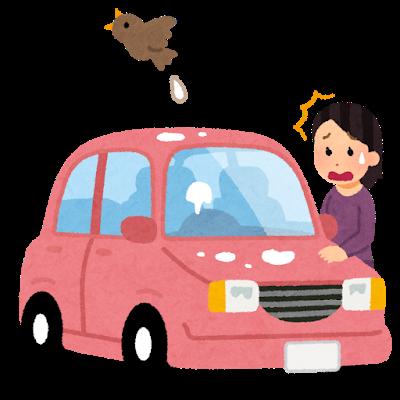 bird_tori_fun_car