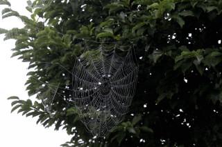 蜘蛛の巣_004