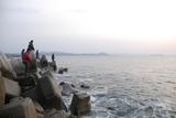 海サクラも