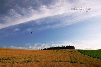 パラグライダーと麦の丘