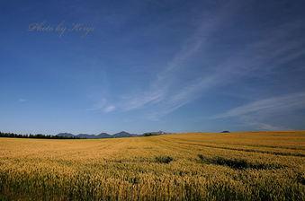 どこまでも麦の丘