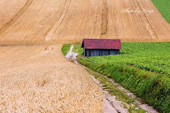 小屋のある風景