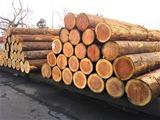 DSC_0193造林杉