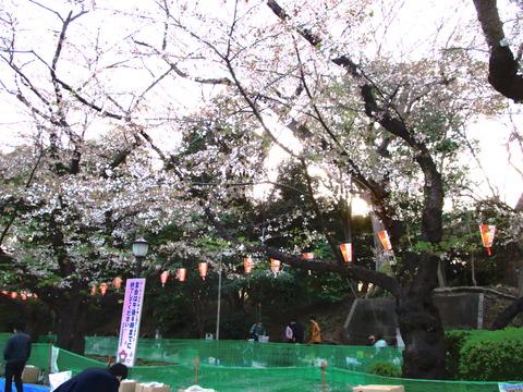春 東京散歩 004