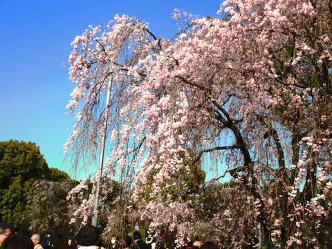 春 東京散歩 015