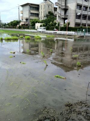 2011田植え1