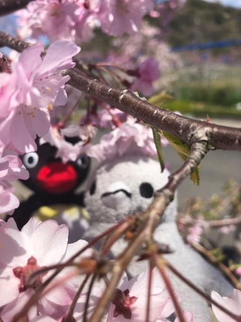 こぶどうちゃんと大豆 春のお花見 熊出没の巻_190412_0032