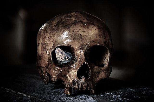 skull-3026666_640