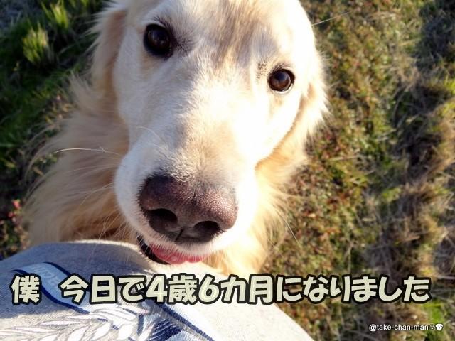 おくん たぬき いぬ 犬の性格はどうやって決まるの?抱っこの仕方も影響? (いぬのきもちNEWS)