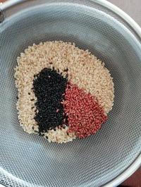 玄米黒米赤米