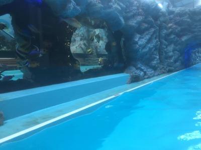 流れるプール