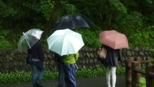 雨の動物園探索