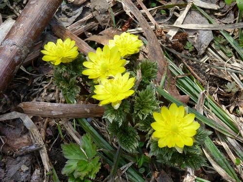 新得山の花