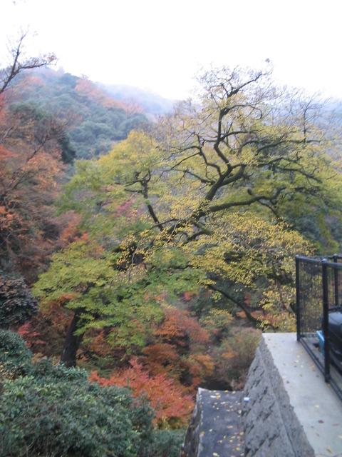 関西紅葉の旅0009-2
