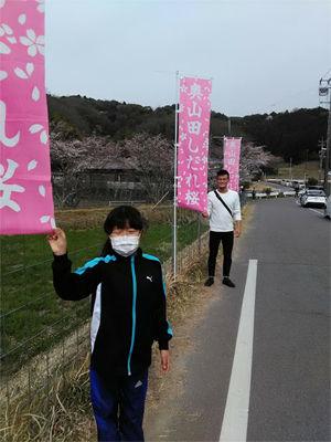 shidare_k