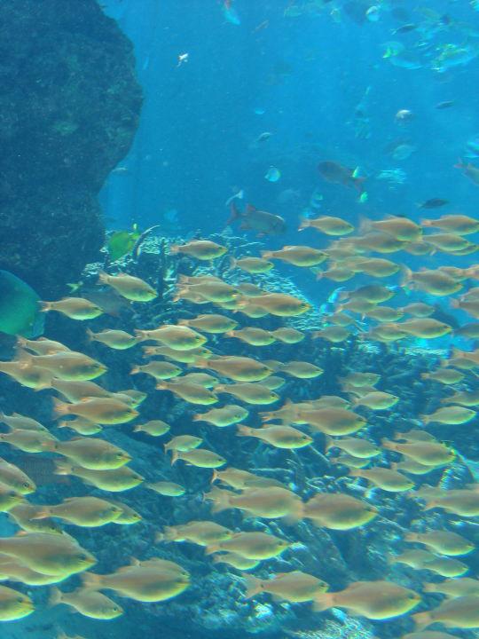 沖縄美ら海水族館23