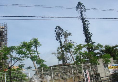沖縄国際大学11
