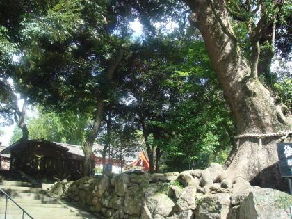 鹿児島神宮11