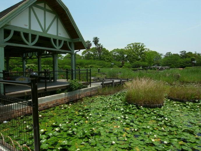 神野公園14