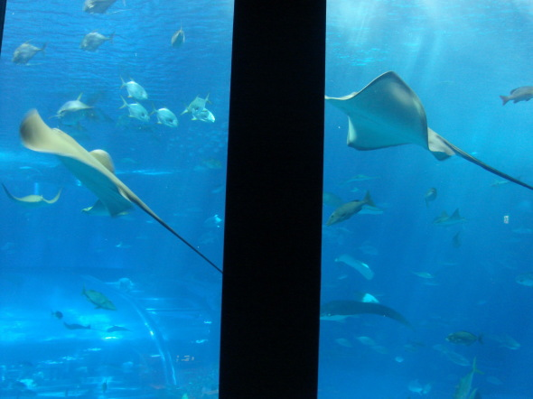 沖縄美ら海水族館25