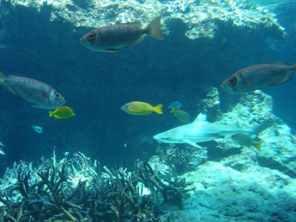 沖縄美ら海水族館20