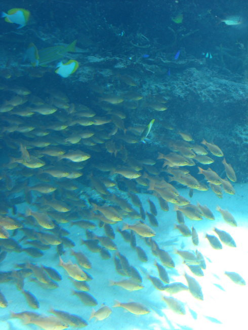 沖縄美ら海水族館22