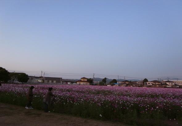 キリンビール甘木工場13