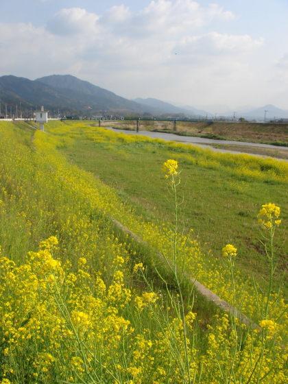 添田町10