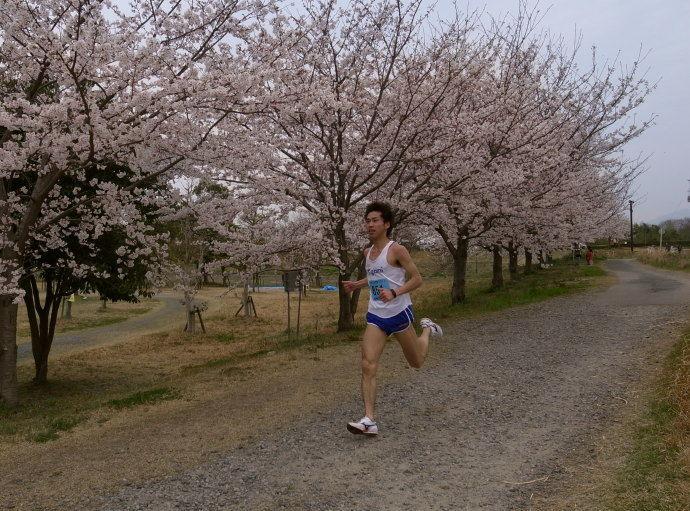 さが桜マラソン54