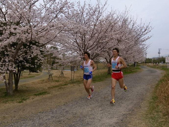 さが桜マラソン57